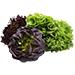 Salate și verdețuri
